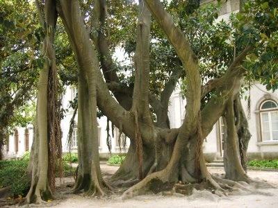 Botanical Garden, Lisbon