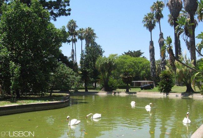 Tropical Botanical Garden, Lisbon