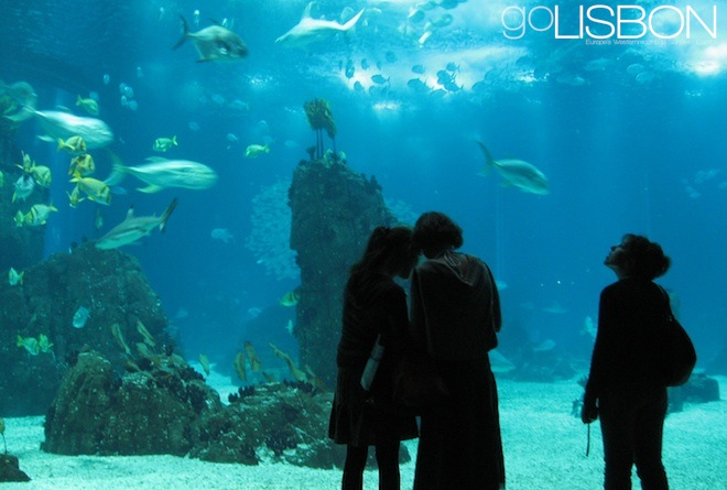 Oceanarium, Lisbon