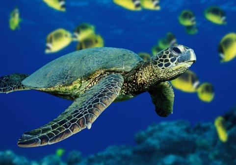 Sea Turtles, Lisbon