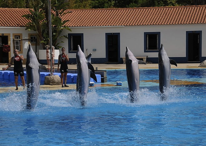 Zoo, Lisbon